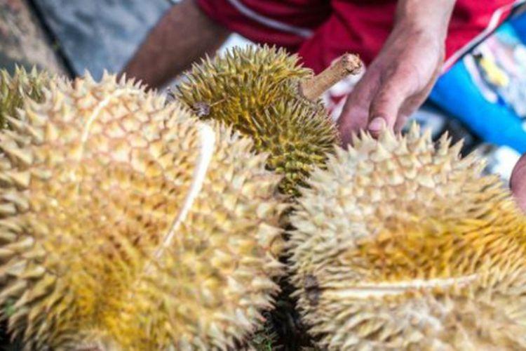 Perbedaan Durian Medan Dengan Durian Bengkulu