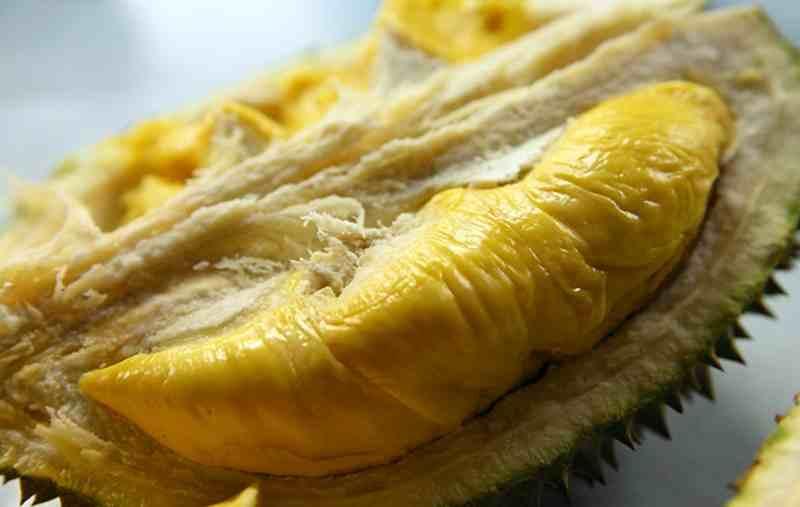 Keistimewaan Durian Bengkulu