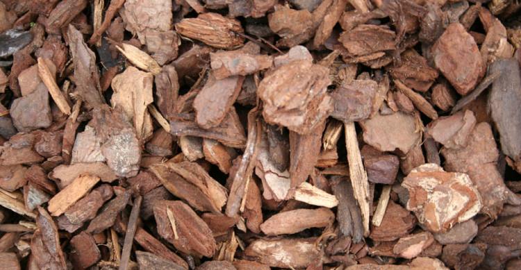 Khasiat Ekstrak Kulit Kayu Pinus Untuk Kesehatan